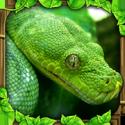 蟒蛇模拟器破解版(解锁完整)